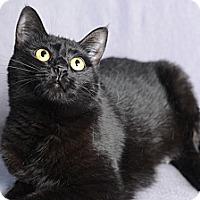 Adopt A Pet :: Cleopatra - Atlanta, GA