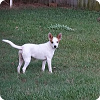 Adopt A Pet :: Keelee - Little Rock, AR