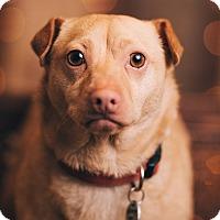 Adopt A Pet :: Fozzie - Portland, OR