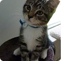 Adopt A Pet :: Curio - Colmar, PA