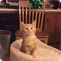 Adopt A Pet :: Friskey - Hainesville, IL
