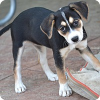 Adopt A Pet :: Twilight - Simi Valley, CA