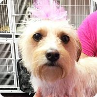 Adopt A Pet :: DAISY - Nashville, TN