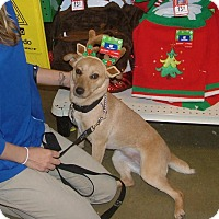Adopt A Pet :: May Lene - North Little Rock, AR