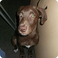 Adopt A Pet :: Splash - Catharpin, VA