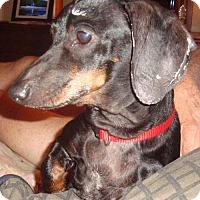 Adopt A Pet :: Mia - Humble, TX