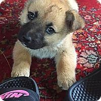 Adopt A Pet :: Sandy - Brooklyn Center, MN