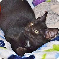 Adopt A Pet :: Rockin' Rosie - Davis, CA