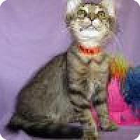 Adopt A Pet :: Willis - Powell, OH