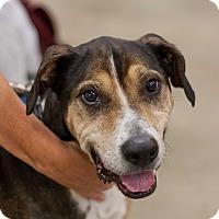 Adopt A Pet :: Preston - Minneapolis, MN