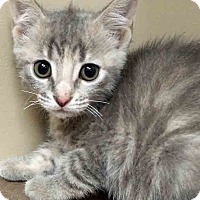 Adopt A Pet :: Delilah - Oswego, IL