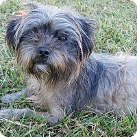 Adopt A Pet :: Candy - West Deptford, NJ