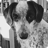 Adopt A Pet :: Hani (Turtle) - Albertville, MN
