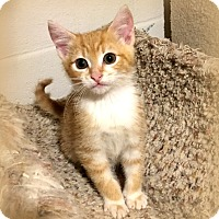 Adopt A Pet :: Mickey - Millersville, MD
