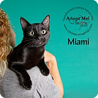 Adopt A Pet :: Miami - Friendswood, TX