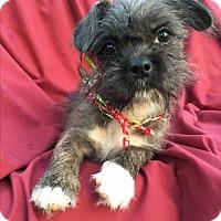 Adopt A Pet :: Rasta - Los Angeles, CA