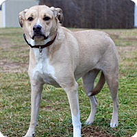 Adopt A Pet :: Chloe - Waldorf, MD