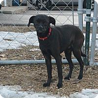 Adopt A Pet :: Walter - Meridian, ID