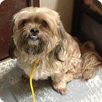 Adopt A Pet :: Chelsea - Freeport, NY