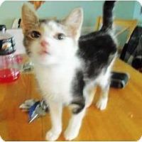 Adopt A Pet :: Audrey Hepburn - Catasauqua, PA