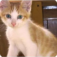 Adopt A Pet :: Rocco - Warren, OH