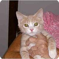 Adopt A Pet :: Baxter - Jenkintown, PA