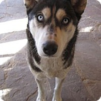 Adopt A Pet :: Haven - Santa Fe, NM