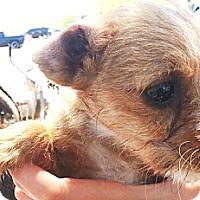 Adopt A Pet :: Asia - Phoenix, AZ