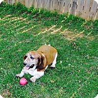 Adopt A Pet :: Matsen - Northport, AL