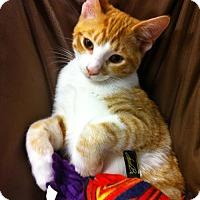 Adopt A Pet :: Benford - Watkinsville, GA
