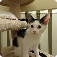 Adopt A Pet :: Gumdrop - Colmar, PA