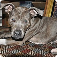 Adopt A Pet :: MISS MOLLY NEEDS A FOSTER - Bainbridge Island, WA
