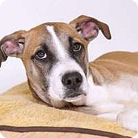 Adopt A Pet :: Butter - Sudbury, MA