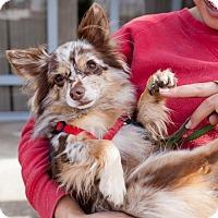 Adopt A Pet :: St. Clair - San Diego, CA