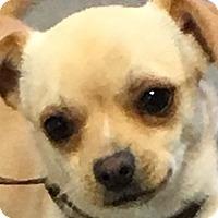 Adopt A Pet :: Junior - MINNEAPOLIS, KS