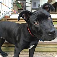 Adopt A Pet :: Thelma Liz - Houston, TX
