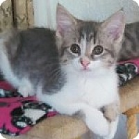 Adopt A Pet :: Bubbles - McHenry, IL