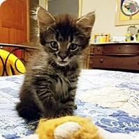 Adopt A Pet :: Orson - Austin, TX