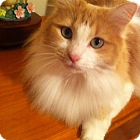 Adopt A Pet :: Carmelita - Garland, TX