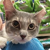 Adopt A Pet :: Star JMc - Schertz, TX