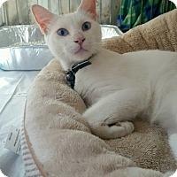 Adopt A Pet :: Casper - Brooklyn, NY