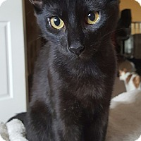 Adopt A Pet :: Wolfie-5 MONTHS - Naperville, IL