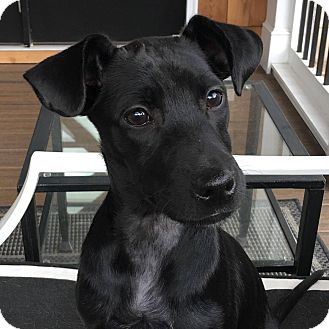 Terrier (Unknown Type, Small) Mix Puppy for adoption in CUMMING, Georgia - Joy