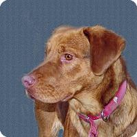 Adopt A Pet :: Huck - Ruidoso, NM