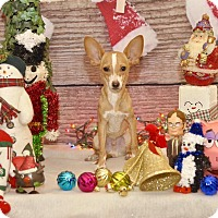 Adopt A Pet :: Ears - Las Vegas, NV