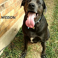 Adopt A Pet :: Wesson - Denton, TX