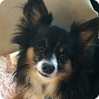 Adopt A Pet :: Asa - San Diego, CA