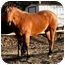 Photo 2 - Quarterhorse for adoption in Washington, Connecticut - Jody