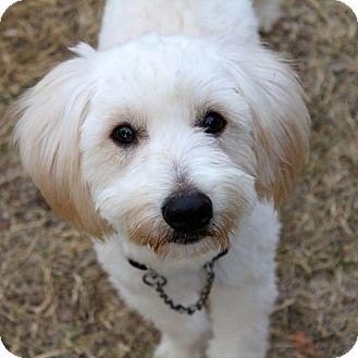 Where Can I Adopt A Dog In Phoenix Az