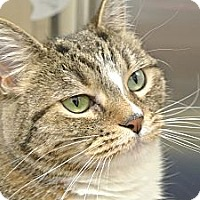 Adopt A Pet :: Lucy - Foothill Ranch, CA